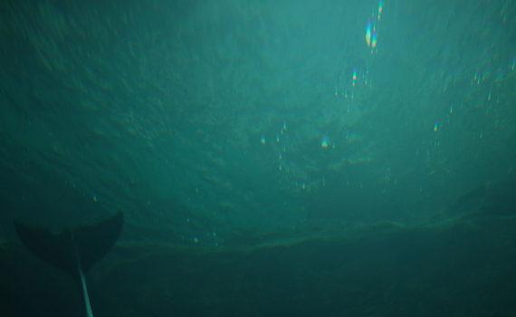 海遊館のイルカ